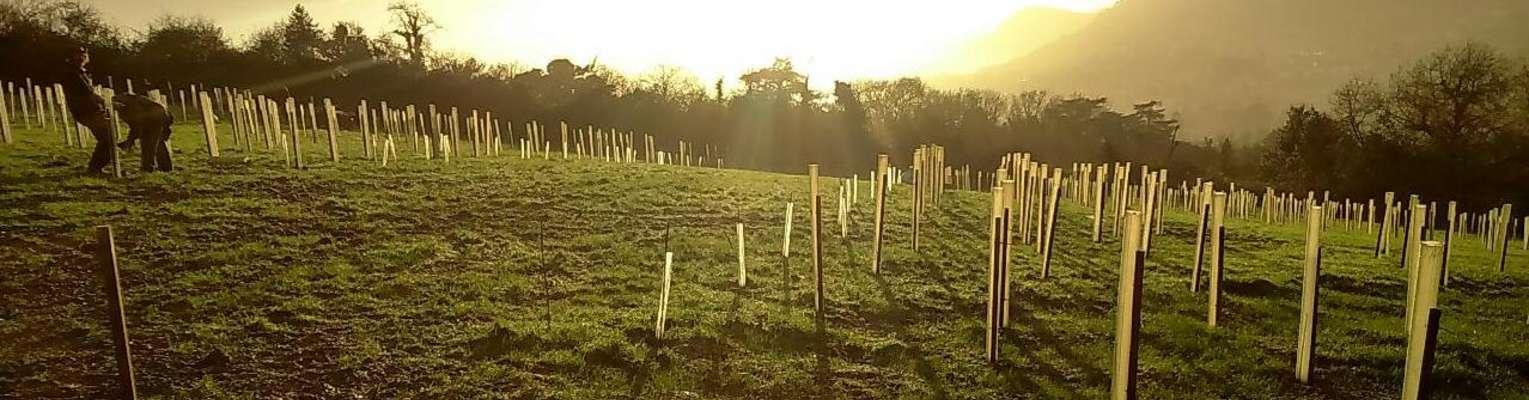 Perrie Hale Nursery: Quality Trees, Hedge plants & Shrubs
